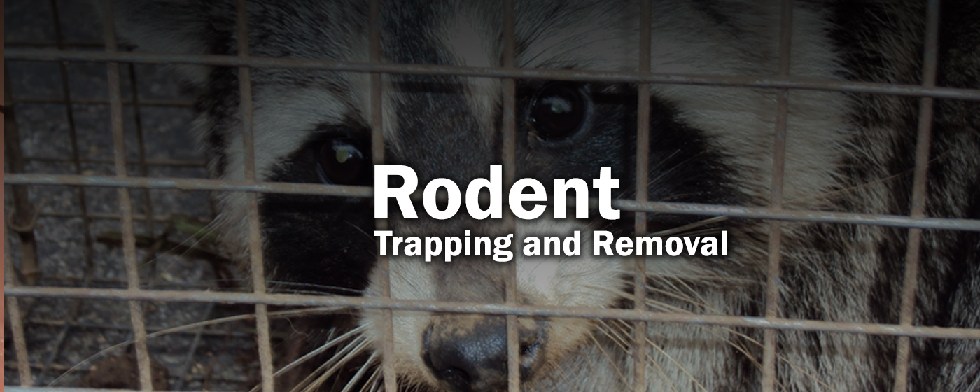 Trapping and Rodents