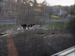 Pest Prevention Window Screen
