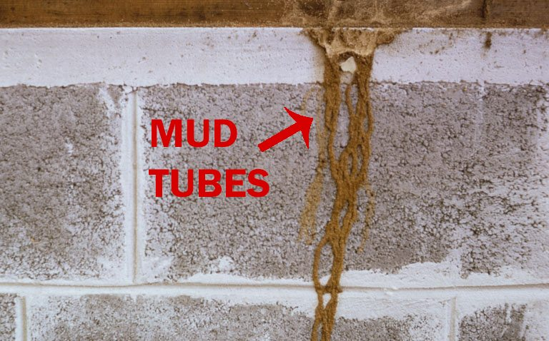 Signs Of Termites Rockwall Termite Inspections Treatment