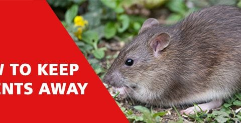 Keep Rodents Away